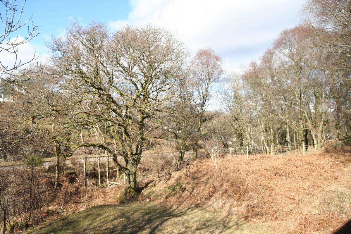 Building Plots Bracken Wood - Williamson and Henry